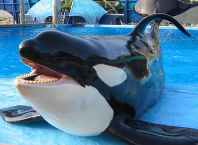 2011 Sea World One Ocean Whale Show