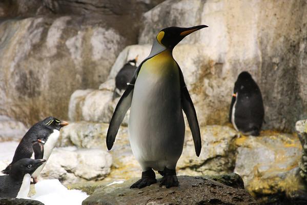 2011 Sea World Penguins
