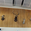 the taxidermy display in the main terminal-this is only half of the wall display