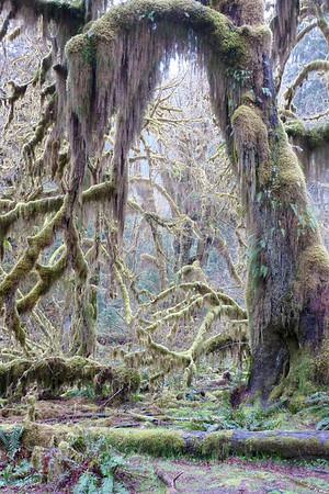 Hoh Rainforest April 2011