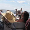 Carlos, a French bulldog owned by Erin, making his voyage