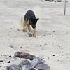 Day 2 (20) - Sand Mtn 11
