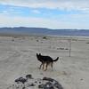 Day 2 (17) - Sand Mtn 8