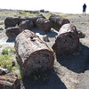 Day 23 (20) Petrified Forest