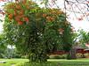 Tree (G12)