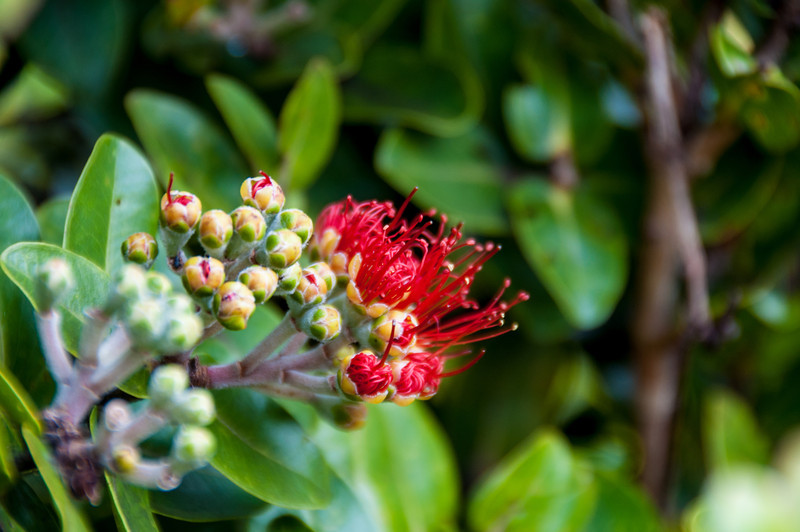 Always love Hawaii's flora