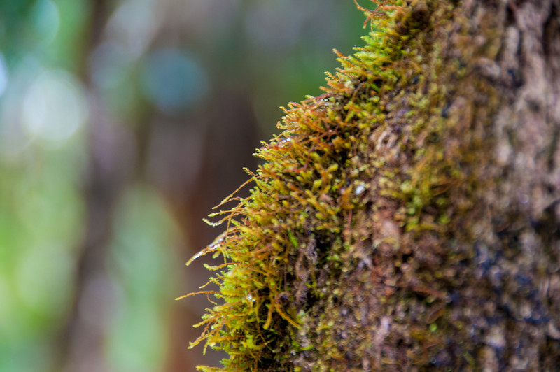 It's Hawaii - there's lots of beautiful moss