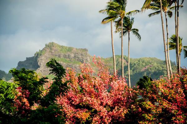 2012 Hawaii Days 4-8