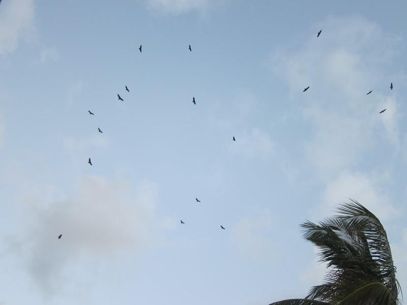 20120315 West Palm Beach (29)