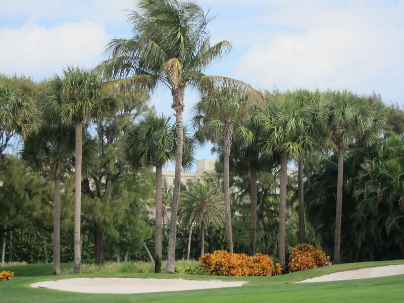 20120311 West Palm Beach (44)