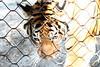 20120312 West Palm Beach Zoo (96)