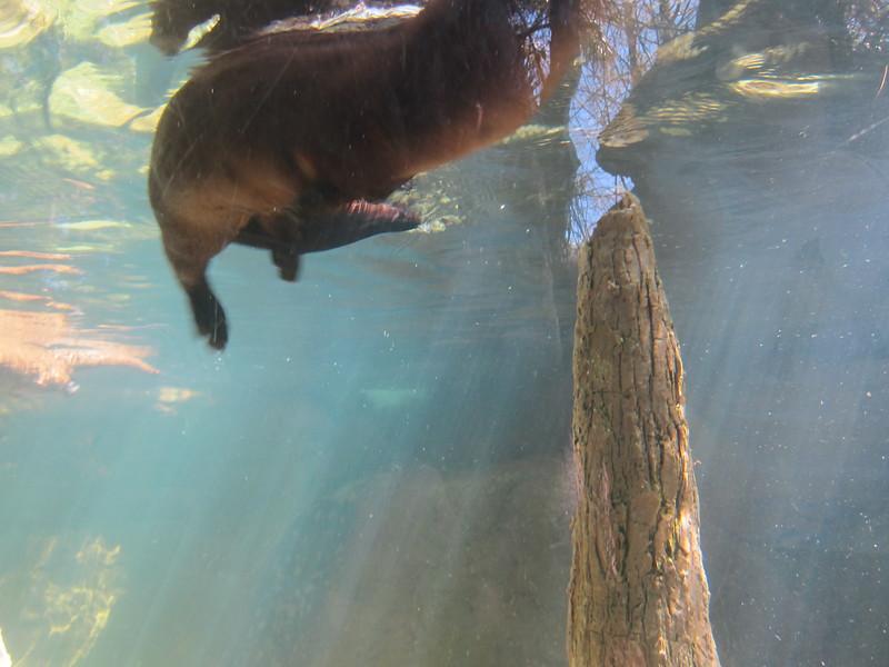 20120312A West Palm Beach Zoo (45)