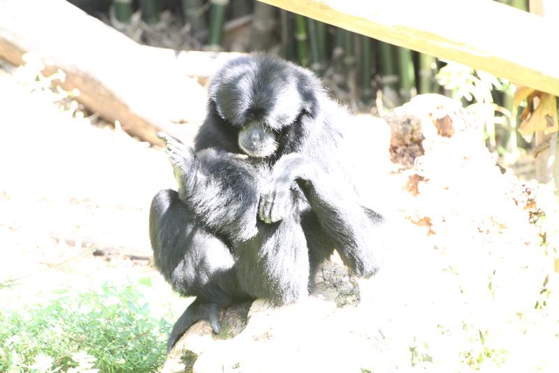 20120312 West Palm Beach Zoo (106)
