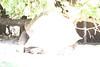 20120312 West Palm Beach Zoo (100)