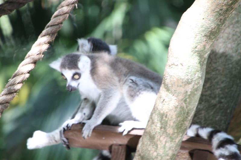 20120312 West Palm Beach Zoo (165)