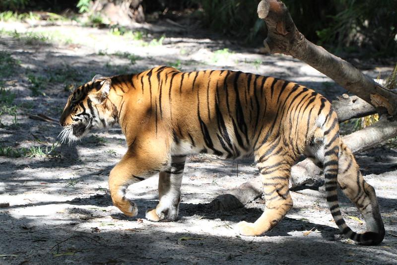20120312 West Palm Beach Zoo (76)