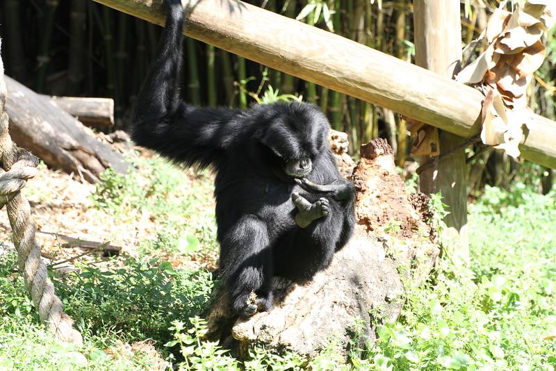 20120312 West Palm Beach Zoo (134)