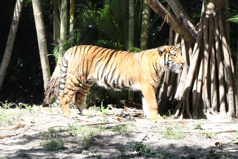20120312 West Palm Beach Zoo (82)