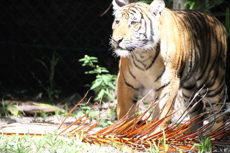 20120312 West Palm Beach Zoo (64)