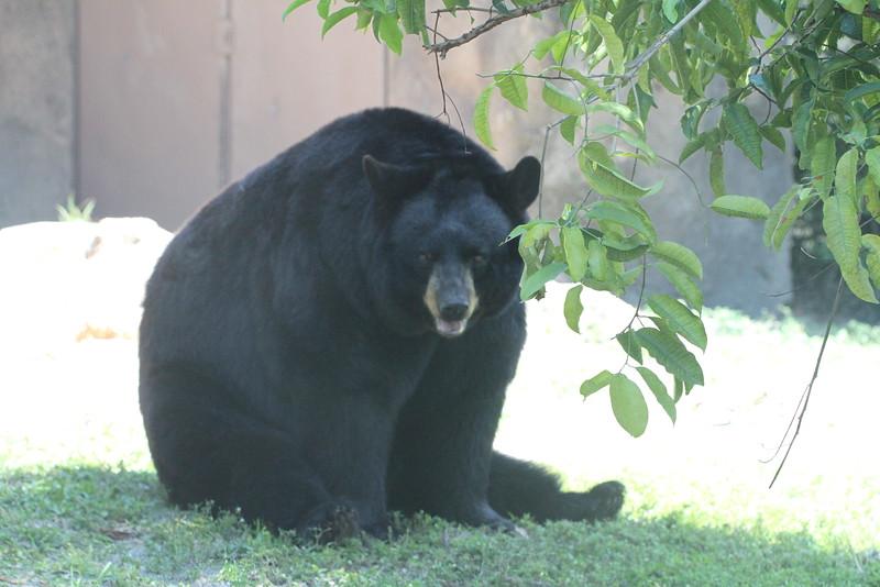 20120312 West Palm Beach Zoo (18)