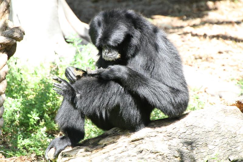 20120312 West Palm Beach Zoo (123)