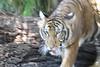 20120312 West Palm Beach Zoo (54)