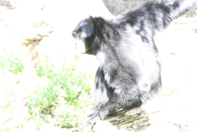 20120312 West Palm Beach Zoo (102)
