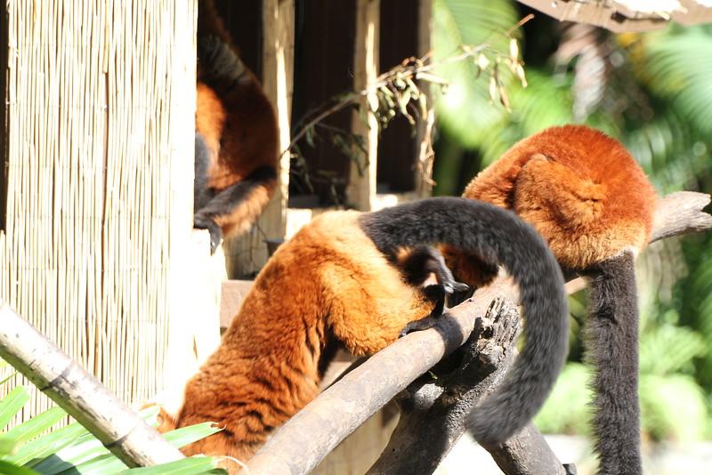 20120312 West Palm Beach Zoo (207)