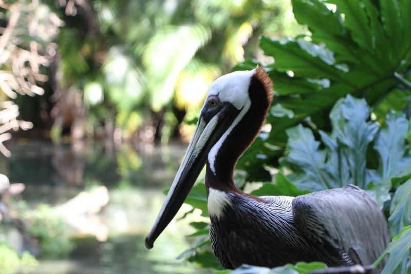 20120312 West Palm Beach Zoo (202)