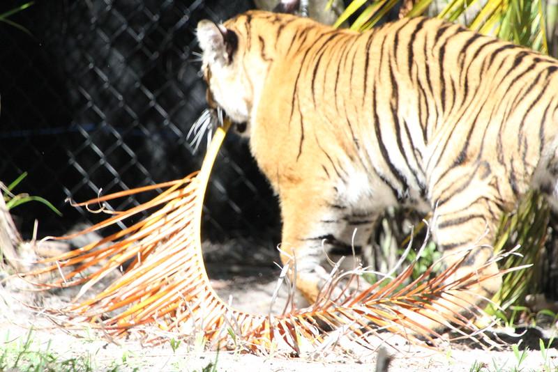 20120312 West Palm Beach Zoo (72)