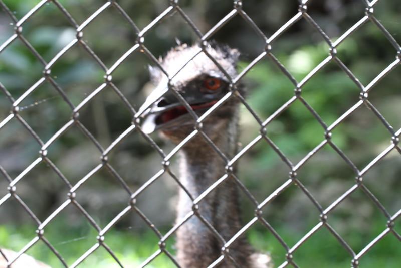 20120312 West Palm Beach Zoo (143)