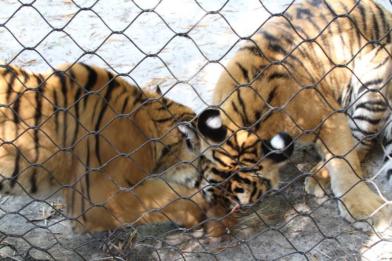 20120312 West Palm Beach Zoo (94)