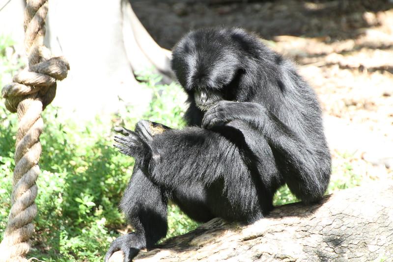 20120312 West Palm Beach Zoo (124)