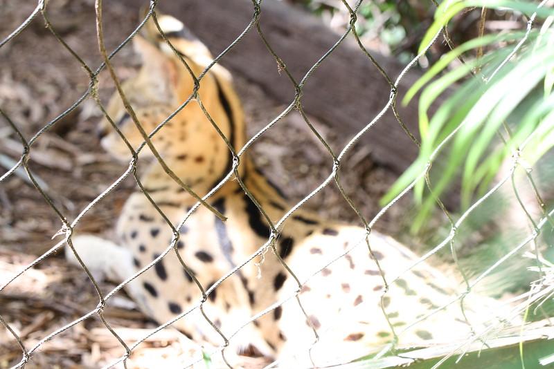 20120312 West Palm Beach Zoo (121)