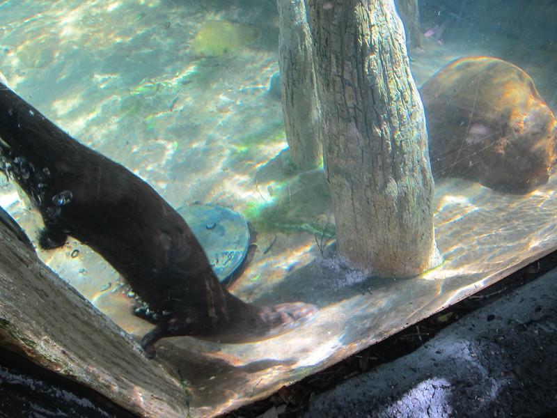 20120312A West Palm Beach Zoo (47)