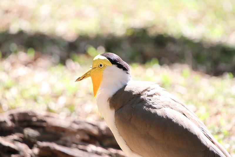 20120312 West Palm Beach Zoo (154)