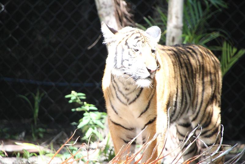 20120312 West Palm Beach Zoo (67)