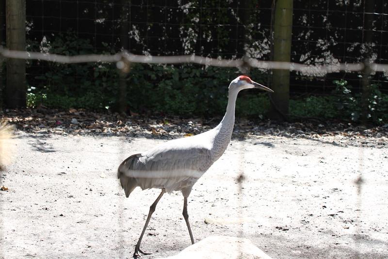 20120312 West Palm Beach Zoo (12)