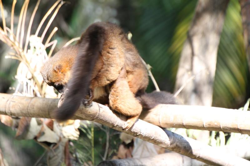 20120312 West Palm Beach Zoo (188)