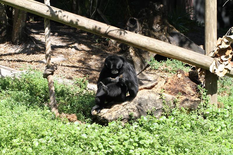 20120312 West Palm Beach Zoo (126)