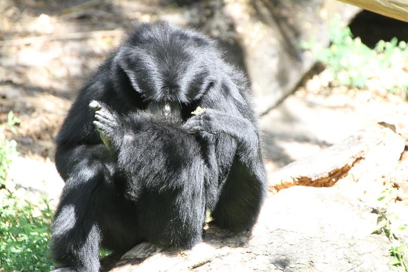 20120312 West Palm Beach Zoo (128)