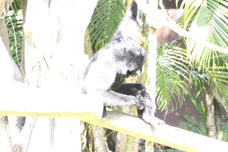 20120312 West Palm Beach Zoo (108)