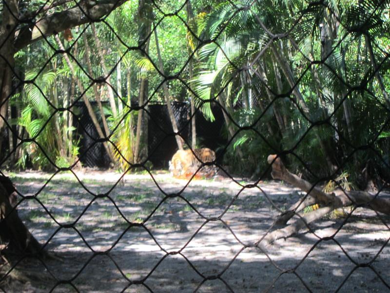 20120312A West Palm Beach Zoo (35)