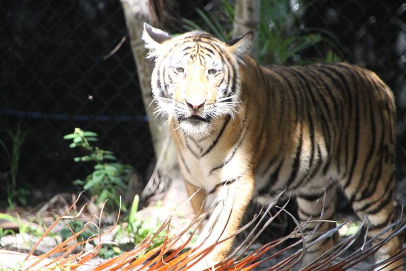 20120312 West Palm Beach Zoo (70)