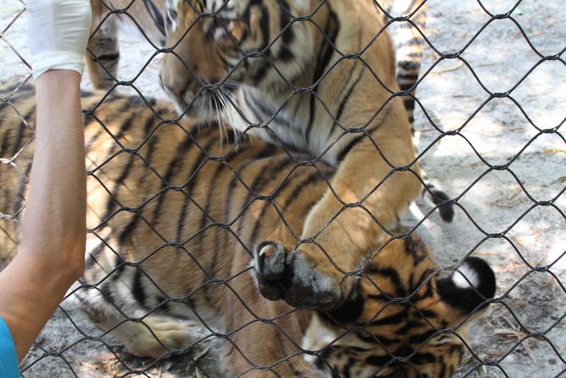 20120312 West Palm Beach Zoo (90)