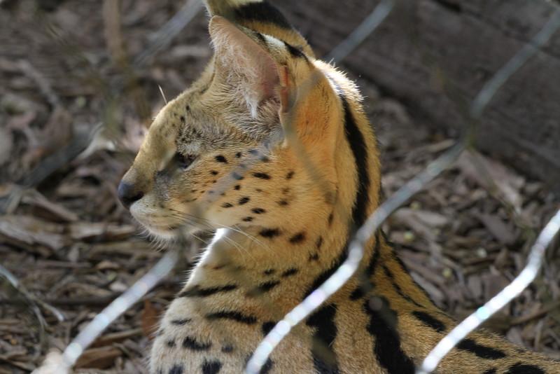 20120312 West Palm Beach Zoo (119)