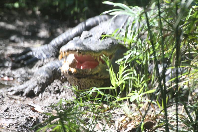 20120312 West Palm Beach Zoo (21)