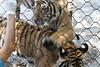 20120312 West Palm Beach Zoo (89)
