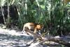 20120312 West Palm Beach Zoo (47)