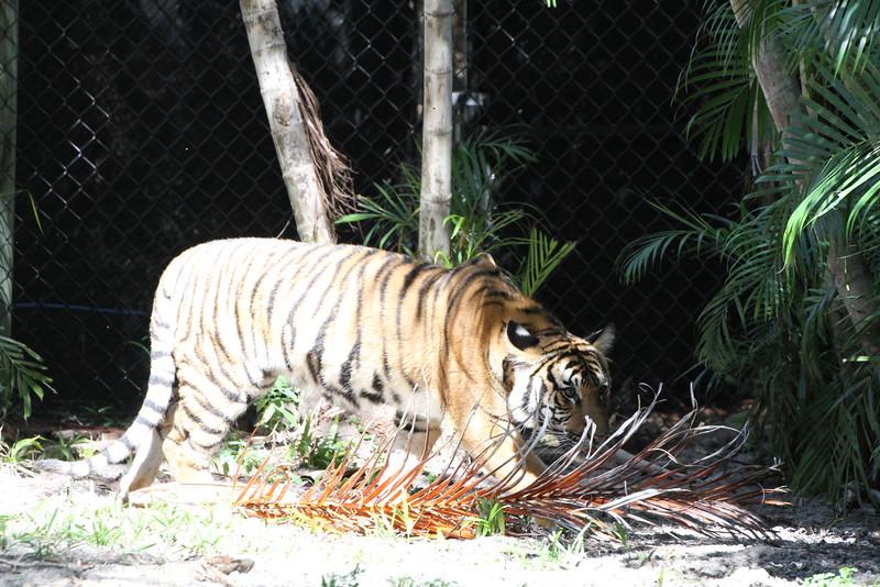20120312 West Palm Beach Zoo (58)